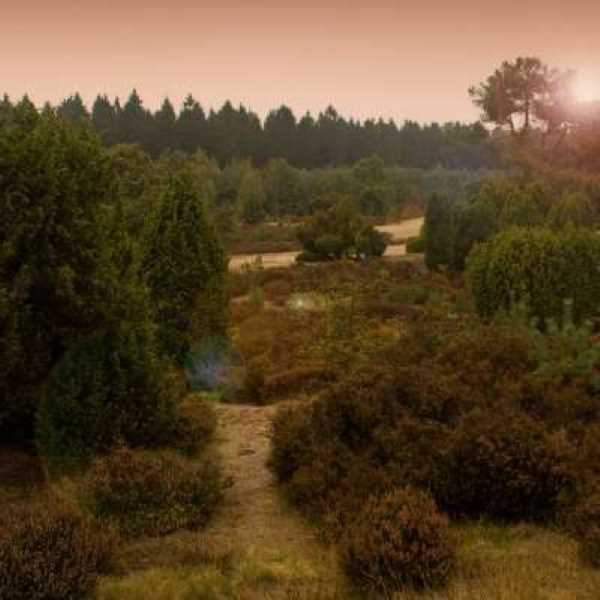 heide bij echten 3 km vanaf bnb molenbergh