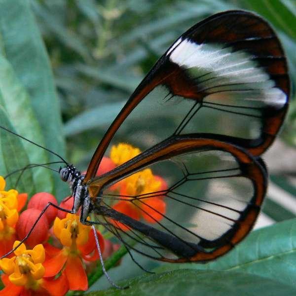 vlinderparadijs papilorama 13 km vanaf bed en breakfast vakantiehuisje molenbergh in zuidwest drenthe