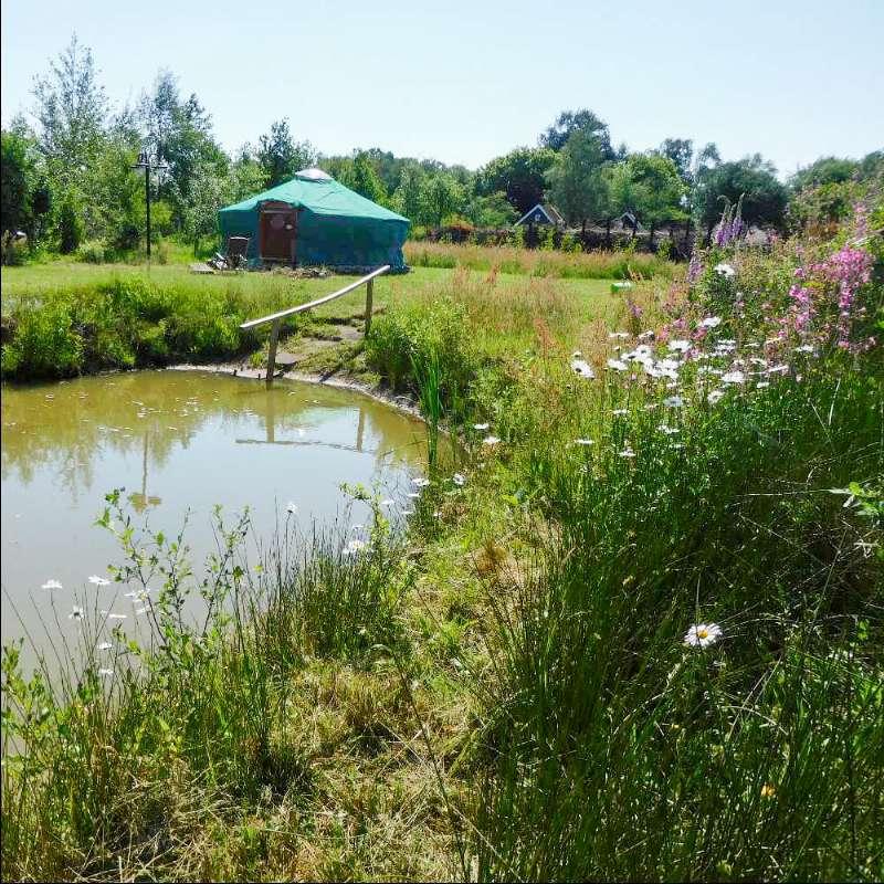 Natuur bij Molenbergh