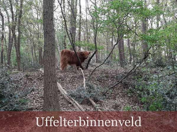 Wandelommetje Berghuizen vanaf bed breakfast vakantiehuisje Molenbergh Drenthe 3