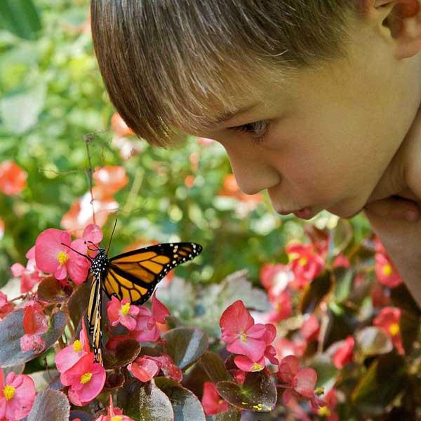 Vlinderparadijs Holtingerveld 13km Vanaf Molenbergh Vakantiehuisje Drenthe